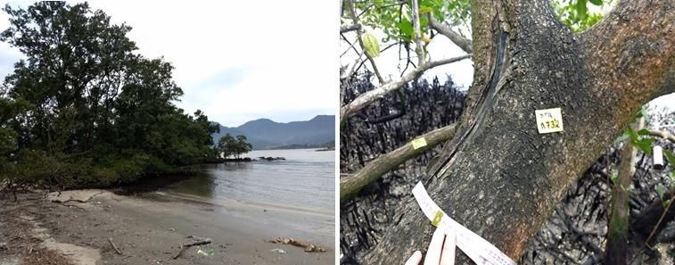 Nota de esclarecimento sobre o Monitoramento Ambiental do Manguezal do Araçá